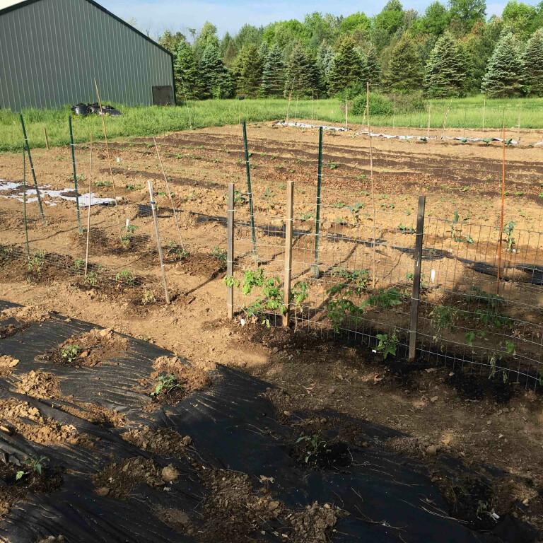 CLC Fishers Garden Update